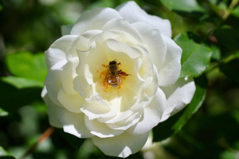 Olivia Feild — Buzzy Bee